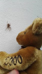 Teddy examines a small spider on the wall